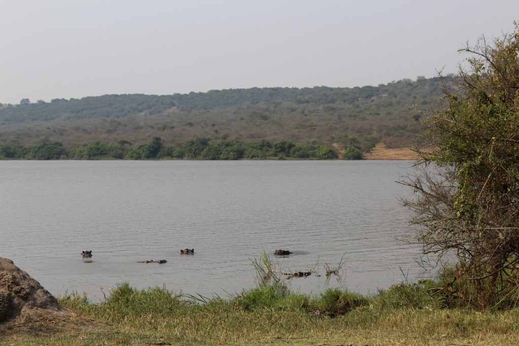 Akagera National Park - hippo heaven
